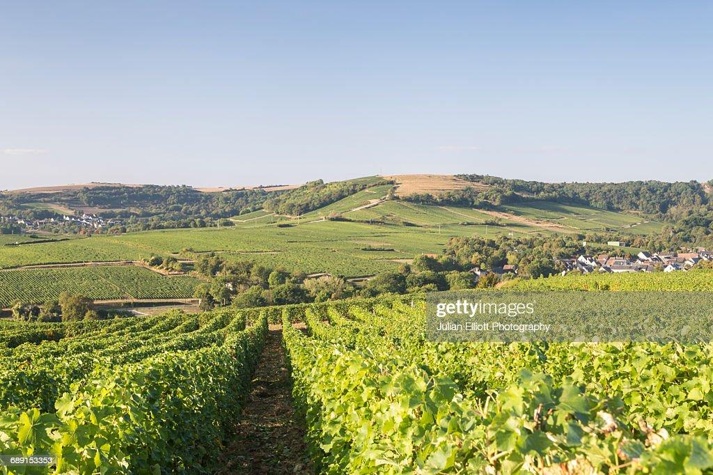 The vineyards of Sancerre, France. : Stock Photo