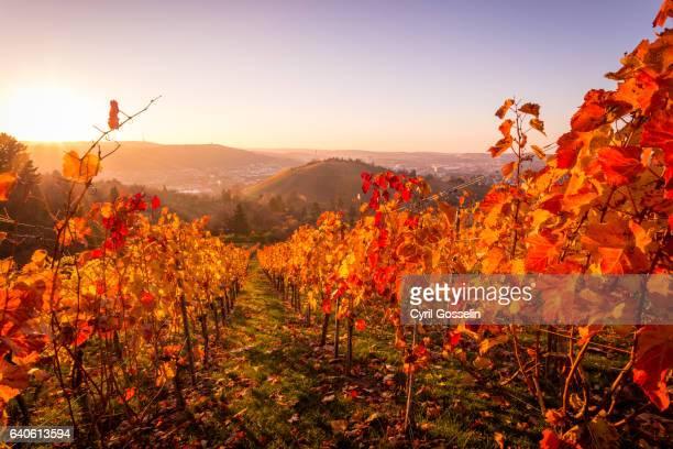 The vineyards of Stuttgart