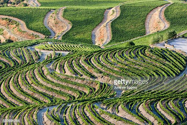 the vineyards of the douro valley above pinhao are set on terraced hillsides above the douro river. - douro valley stock photos and pictures