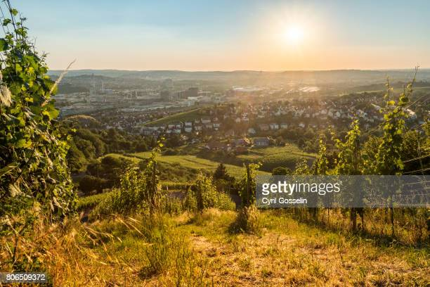 the vineyards over stuttgart - baden württemberg stock photos and pictures