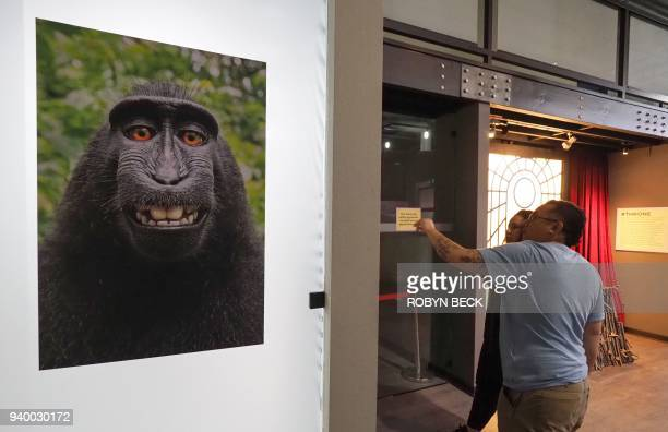 The viral selfie taken by a maque monkey using the smart phone of nature photographer David J Slater and which became the subject of a complicated...