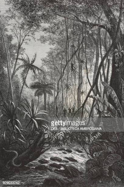 The virgin forest Colombia drawing by Edouard Riou from a sketch of the author Voyage a la Nouvelle Grenade by Charles Saffray from Il Giro del mondo...