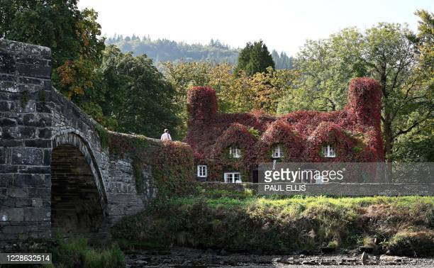The Virginia creeper on the outside of the Tu Hwnt i'r Bont tea room overlooking the River Conwy starts to turn red with the arrival of Autumn in...