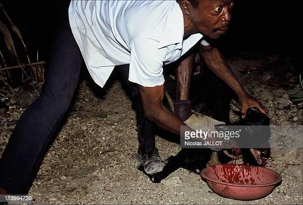 The voodoo In Haiti In 1992Sacrifice of animals