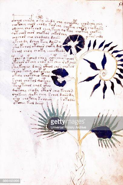 The Voynich manuscript Illustrated codex handwritten in an unknown writing system Carbondated to the early 15th century and may have been composed in...