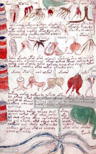 The Voynich Manuscript is considered by scholars to be most interesting and mysterious document ever found. Dated 16th century.