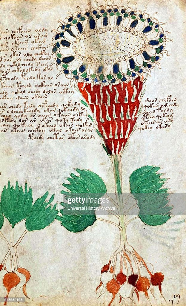 Page from The Voynich Manuscript. : News Photo