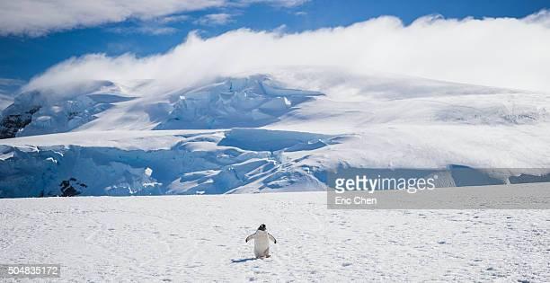 the walk - 南極 ストックフォトと画像