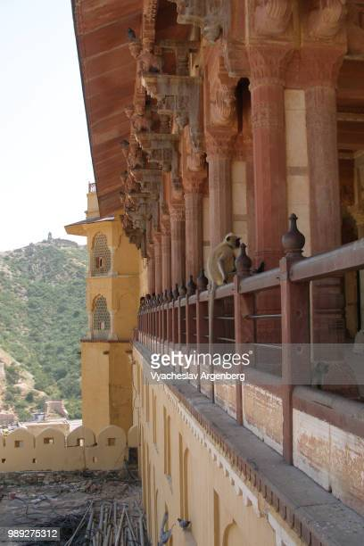 the walls of amer fort, rajasthan, india - argenberg stock pictures, royalty-free photos & images