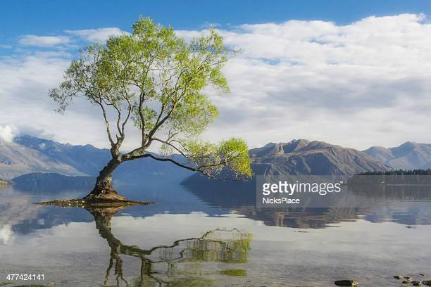 the wanaka tree - single tree stock pictures, royalty-free photos & images