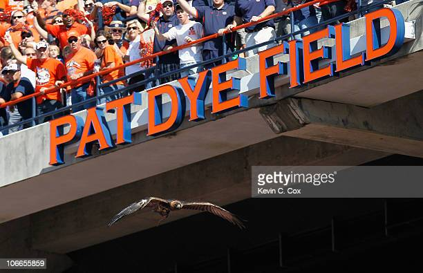 The War Eagle of the Auburn Tigers flies down to Pat Dye Field before the game against the LSU Tigers at JordanHare Stadium on October 23 2010 in...