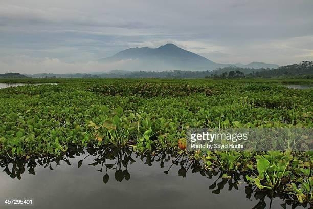 The Water Hyacinth on Situ Bagendit