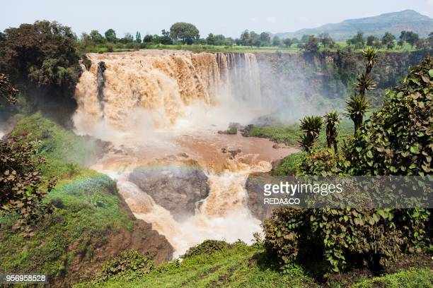 The waterfalls of the Blue Nile called Tis Isat in Ethiopia towards the end of the rainy season Africa East Africa Ethiopia September 2010