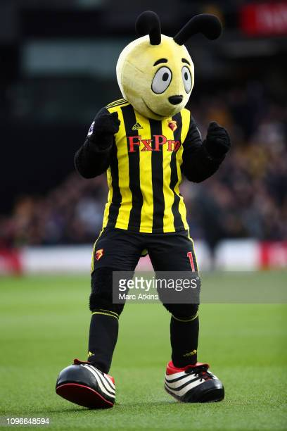 The Watford Mascot Harry the Hornet during the Premier League match between Watford FC and Everton FC at Vicarage Road on February 9 2019 in Watford...