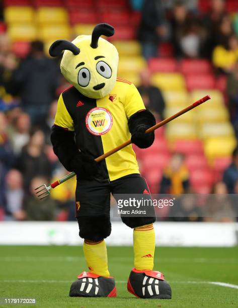 The Watford mascot helps the pitch staff ahead of the Premier League match between Watford FC and Sheffield United at Vicarage Road on October 05,...