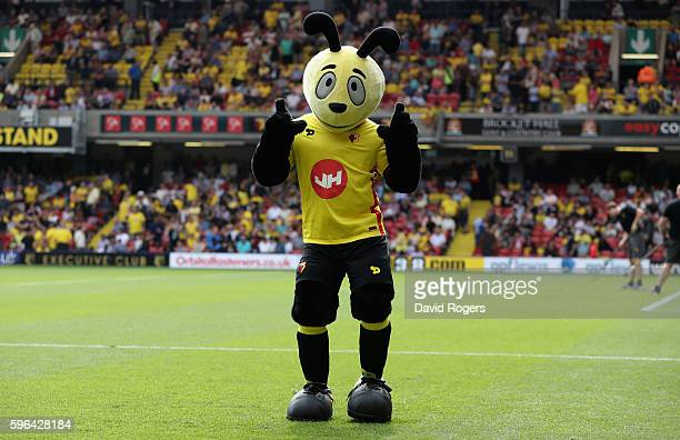 The Watford mascot looks on during the Premier League match between Watford and Arsenal at Vicarage Road on August 27 2016 in Watford England