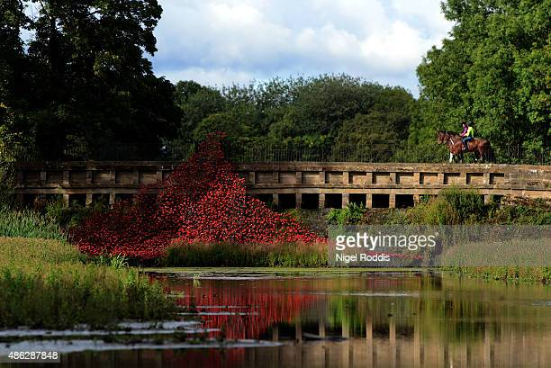 The Wave which is part of Blood Swept Lands and Seas of Red by artist Paul Cummins and designer Tom Piper is installed at Yorkshire Sculpture Park on...