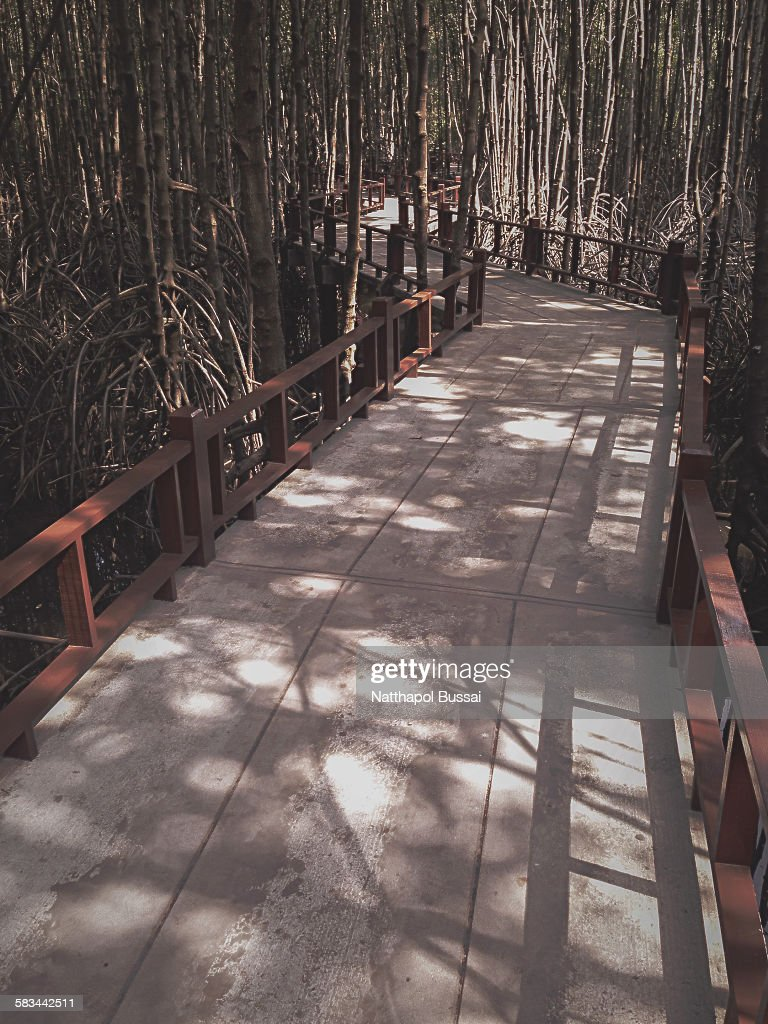 The way in Mangrove forest, Thailand : Stock Photo