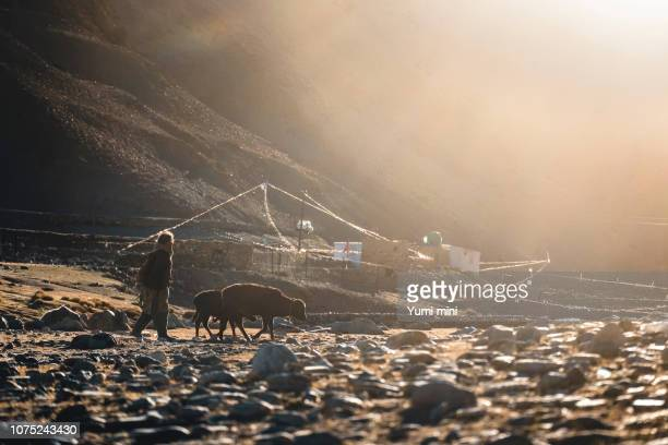 The way of life of the villagers living in Tso Moriri Lake ,Ladakh district of Kashmir, India