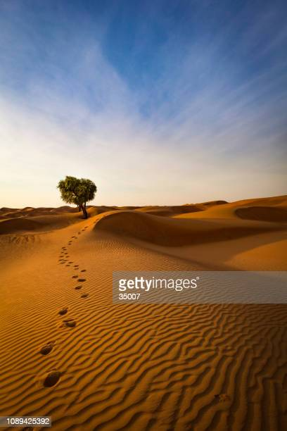 the way out of the desert, sultanate of oman - footprint stock pictures, royalty-free photos & images