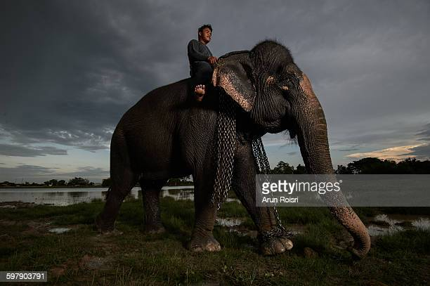 The ways of man and elephant