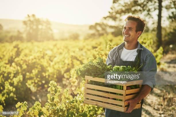 o tempo tem sido perfeito para a colheita - agricultor - fotografias e filmes do acervo