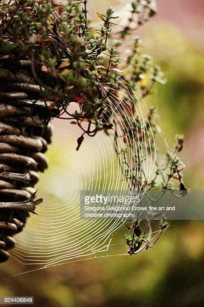 the web - gregoria gregoriou crowe fine art and creative photography stock photos and pictures