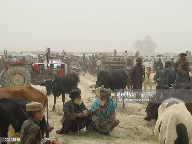 The weekly livestock market in the district in Garmser Afghanistan July 15 2011