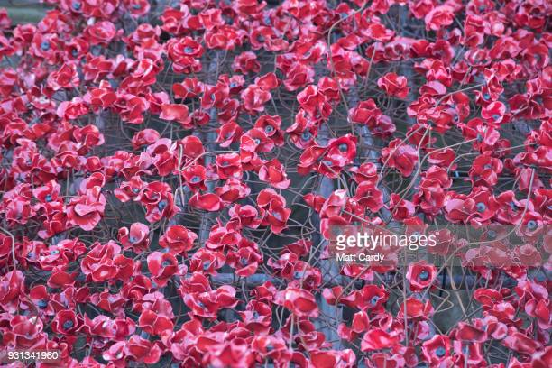 The Weeping Window sculpture opens at Hereford Cathedral as part of the final year of the 1418 NOWs UKwide tour of the poppies on March 13 2018 in...
