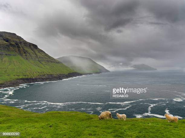 The west coast at Nordradalur The island Streymoy one of the two large islands of the Faroe Islands in the North Atlantic Europe Northern Europe...