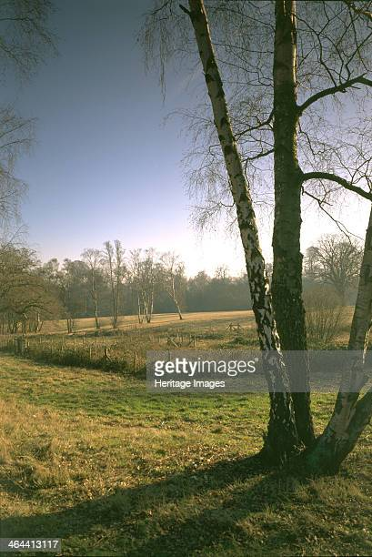 The West Meadow Kenwood House Hampstead London 1997 Part of the West Meadow and the sphagnum bog are seen here on a sunny winter's morning The...