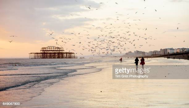 the west pier brighton at sunset - coastline stock photos and pictures