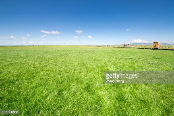 the wetland, grassland