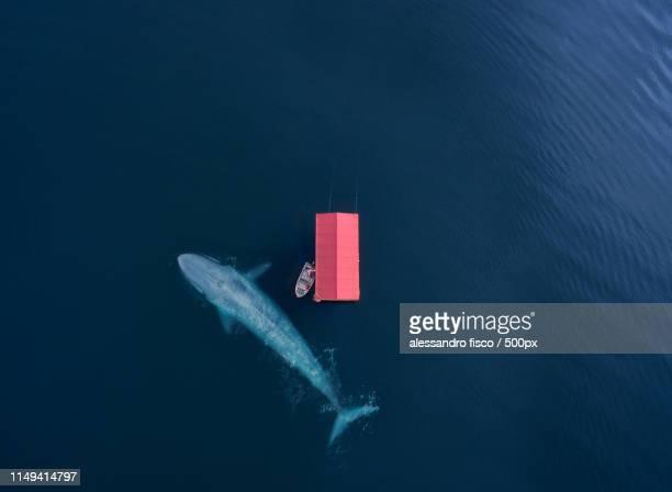 the whale - vertäut stock-fotos und bilder
