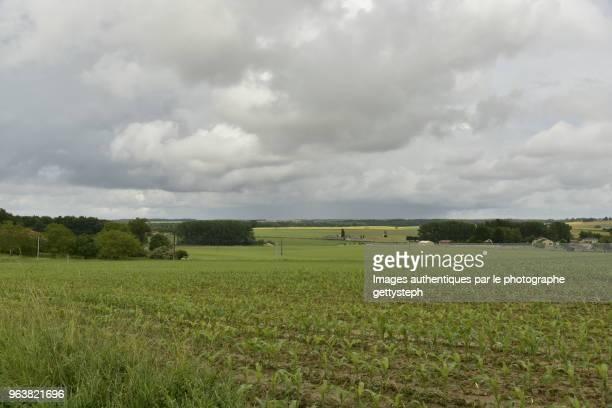 The wheat fields under gray sky