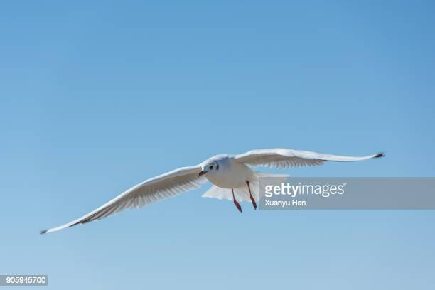 The white bird is flying