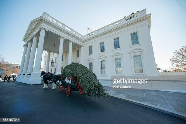 The White House Christmas tree is brought in on a horse drawn carriage to be presented to First Lady Michelle Obama at the White House North Portico...