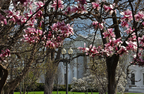The White House Is Seen Through A Bloomi Pictures Getty Images