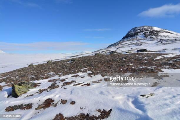 the white wilderness of the jämtland mountains - tundra foto e immagini stock