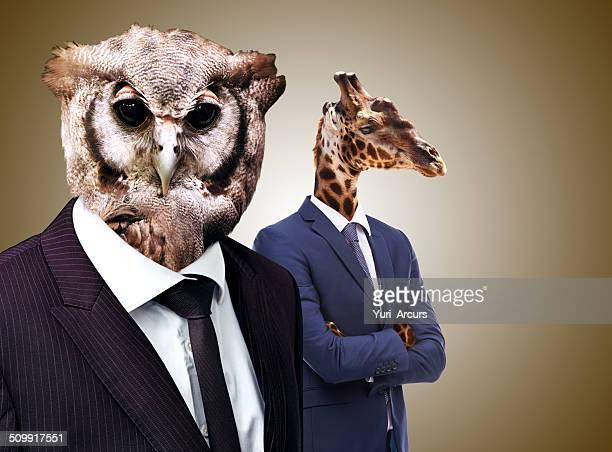 le whoo s whoo dans les affaires - tête d'un animal photos et images de collection