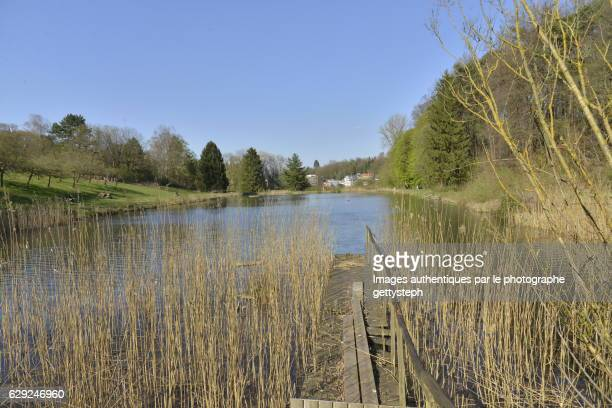 the wild nature in springtime in watermael-boitsfort ponds - pontoon bridge stock pictures, royalty-free photos & images