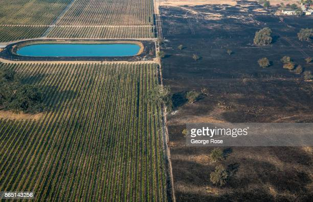 The wildfire burns itself out at the edge of grape vineyard as viewed in this aerial photo taken on October 11 in Santa Rosa California State...