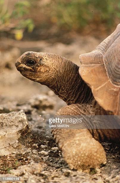 The wildlife on Aldabra island In Seychelles In September, 1992-150.000 giant turtles live here.