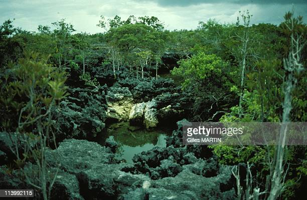 The wildlife on Aldabra island In Seychelles In September 1992Crevasses make the acess to the atoll very difficult
