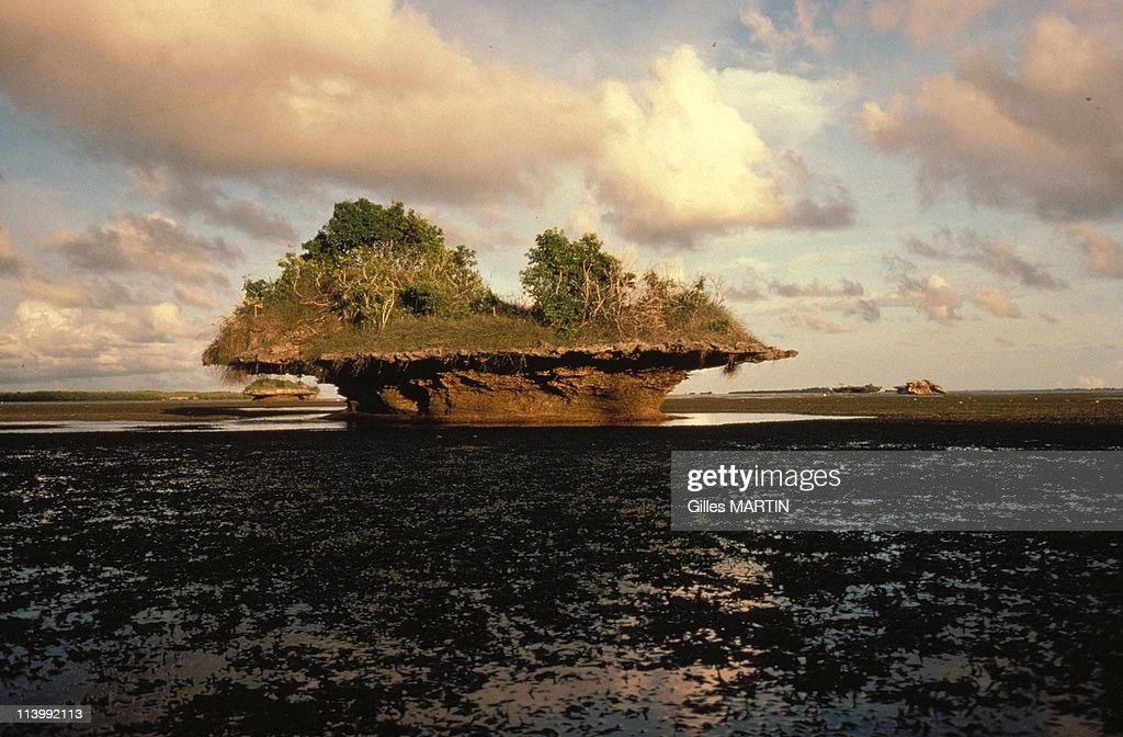 The wildlife on Aldabra island In Seychelles In September, 1992- : News Photo