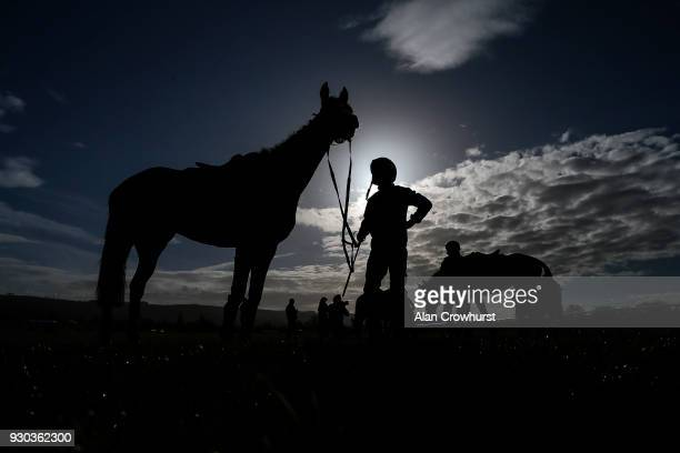 The Willie Mullins trained string relax after exerising on the gallops at Cheltenham racecourse on March 11 2018 in Cheltenham England