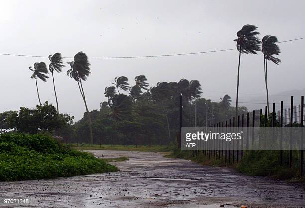 The wind blows into trees on February 4 2010 shows in Papeete on the Pacific island of Tahiti which was placed on Red Alert and vulnerable residents...