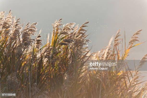 the wind - caputo foto e immagini stock
