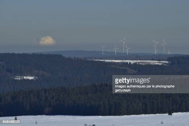 The wind turbines emerging coniferous forest and atmospheric pollution