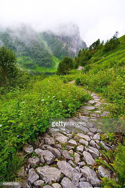 The winding path at the Valley of Flowers
